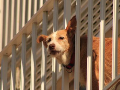 The Condo-Canine Conundrum